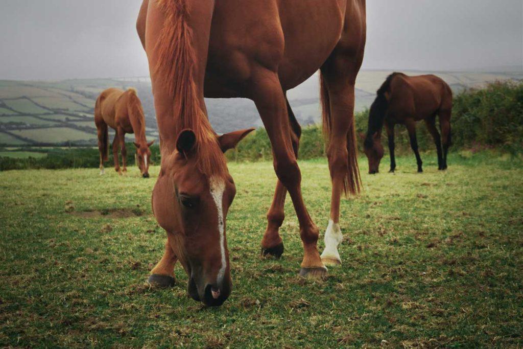 live-02-benessere-del-cavallo